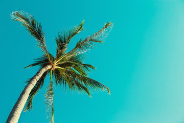 Closeup image of a palm tree at summer turquoise sky background