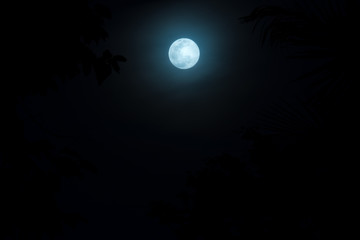 full moon night sky over spruce tree forest in Thailand.(Selecti