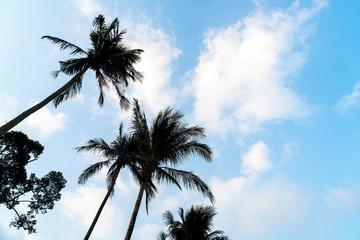 Silhouette palm tree on the beach and sea around beautiful luxur