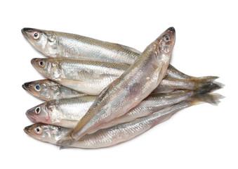 Smelt fishes