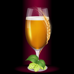 Glass of light beer wrapped wheat spikelet near with fruits of hop. Realistic vector illustration