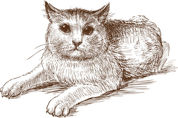 Canvas Prints Hand drawn Sketch of animals scared cat