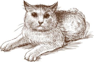 Foto op Canvas Hand getrokken schets van dieren scared cat