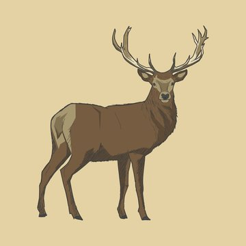 illustration of male deer with sketch style available in vector format (.eps)