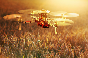 Drone Surveying Wheat Field