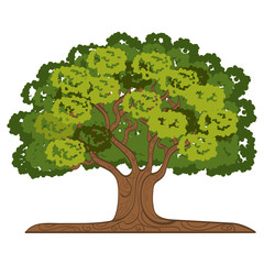 tree isolated  design