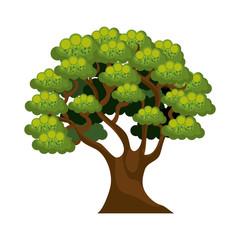 tree isolated  design
