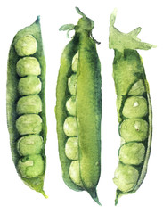 watercolor sketch: peas on a white background