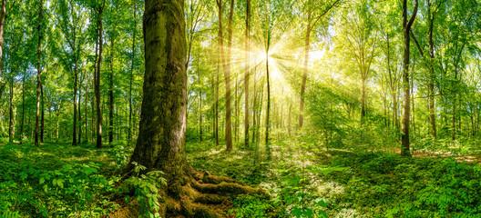 Wald Panorama mit goldenen Sonnenschein