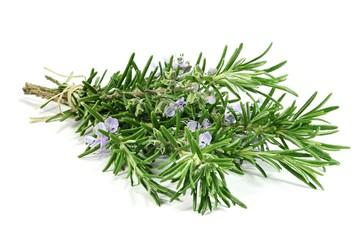 bunch of rosemary isolated on white background