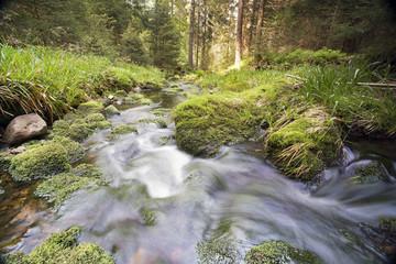 Wildbach im Nationalpark Schwarzwald