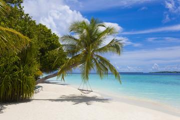Maledivenstrand mit Palme und Schaukel