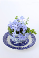 Blue flowers for Spring