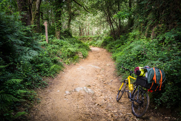 Mountain bike on a path in the forest.