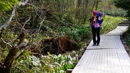 水芭蕉を撮りながらハイキング