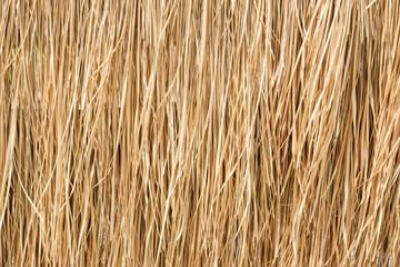Fototapeta Close up yellow straw wall texture backgrond obraz