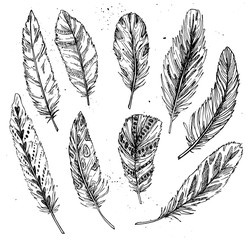 Hand drawn vector vintage illustration - Feathers. Ink and feath