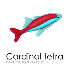 Aquarium fish Cardinal tetra vector illustration isolated on white background.