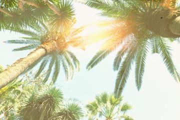 palm tree and sunshine Wall mural