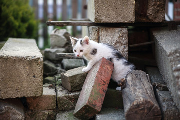 free roaming cats