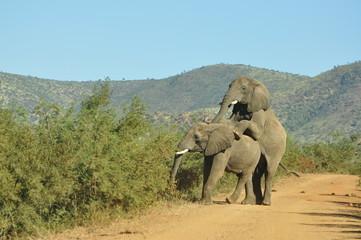aufgenommen im Hluhluwe NP in Südafrika