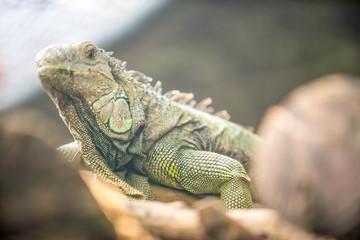 lizard on the log