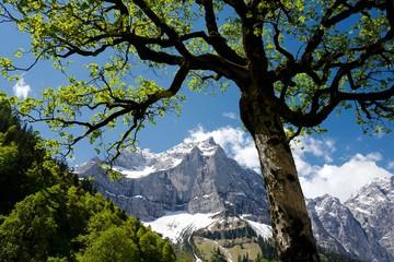 Ahornbaum am großen Ahornboden im Karwendelgebirge