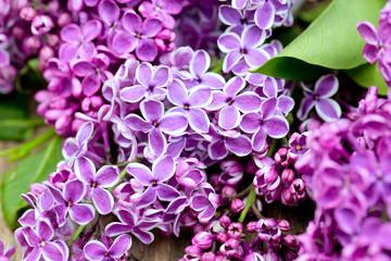 Foto auf Acrylglas Flieder beautiful lilac on wooden surface