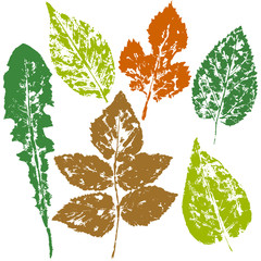 leaves imprint, sheet printing