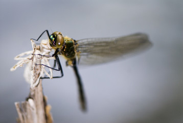 A dragonfly, close-up.