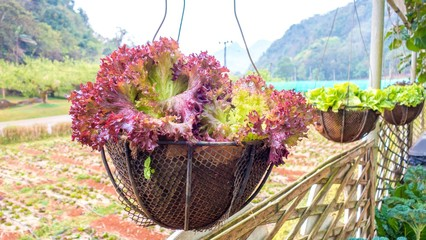 vegetables in basket with nature background