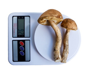 Two brown cap boletus on kitchen scales