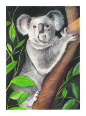 Retrato de un koala subido a un eucalipto