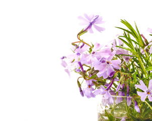 Bouquet of lilac flowers on a white background
