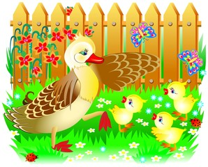 Illustration of duck with three little ducklings, vector cartoon image.