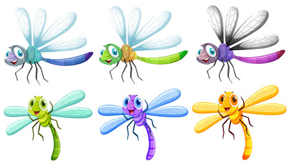 Dragonflies in six colors