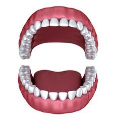 Opened denture isolated on white