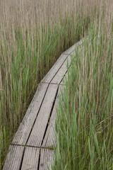 Holzsteg  durch das Ried im Mai