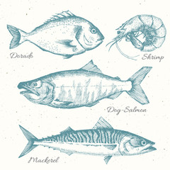 Hand drawn sea life
