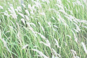 blurry grass flower background