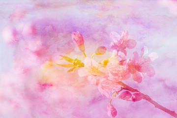 Cherry blossom flowers image mix with painted watercolor on pape