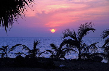 palm trees against the background of sunset over sea, Phuket island