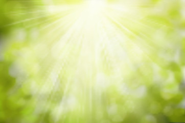 Vector Sunny Green nature background, selective focus