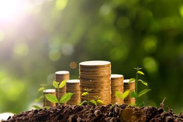 Money growing in soil.