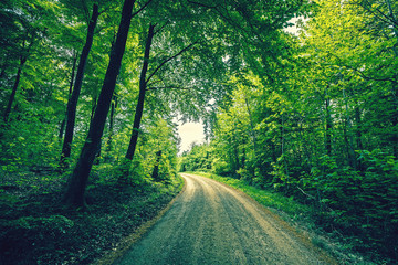 Road passing through a green forest