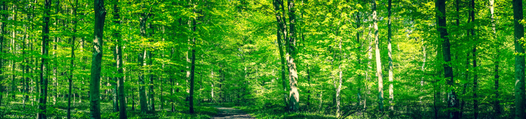Green forest panorama in the spring