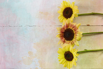 Sunflowers with a watercolor and texture effect.