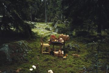 Wild mushrooms in wicker basket.