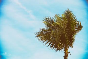 Single Palm Tree - Retro Filtered.