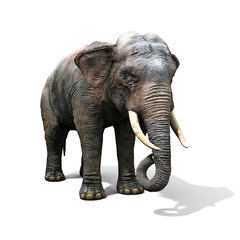 Large elephant isolated on a white background. 3d render